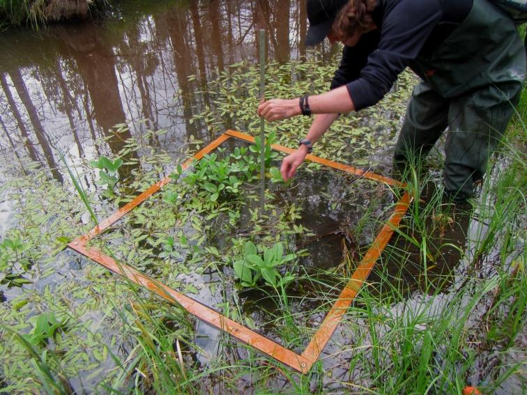 Taking samples in the beaver pond