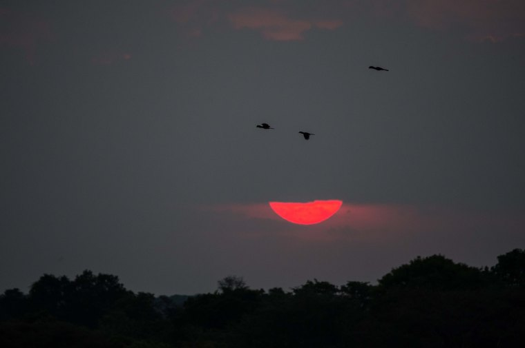Hornbills flying over the sun