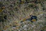 The Andean bear gazing back at me